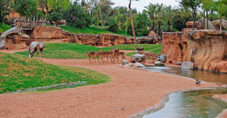 Зоопарк в Валенсии