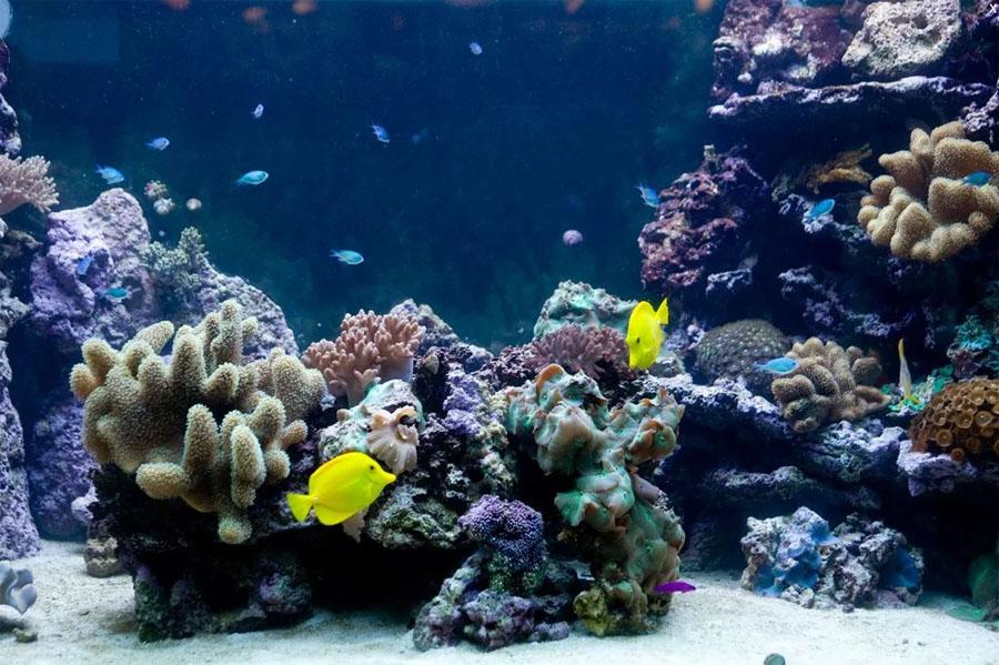 Обитатели аквариума в Барселоне