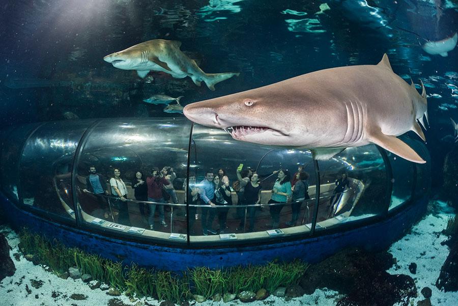 Океанариум в аквариуме Барселоны