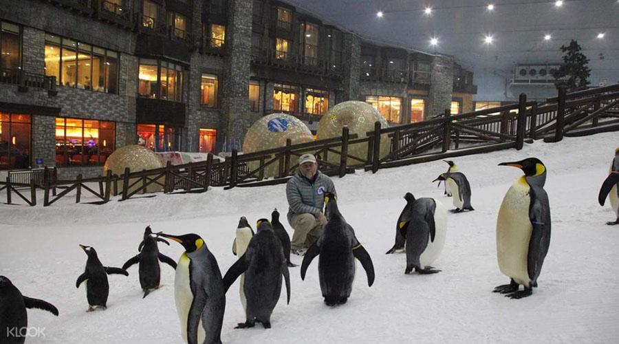 Пингвины в Ски Дубай