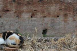 Котики на развалинах в Риме