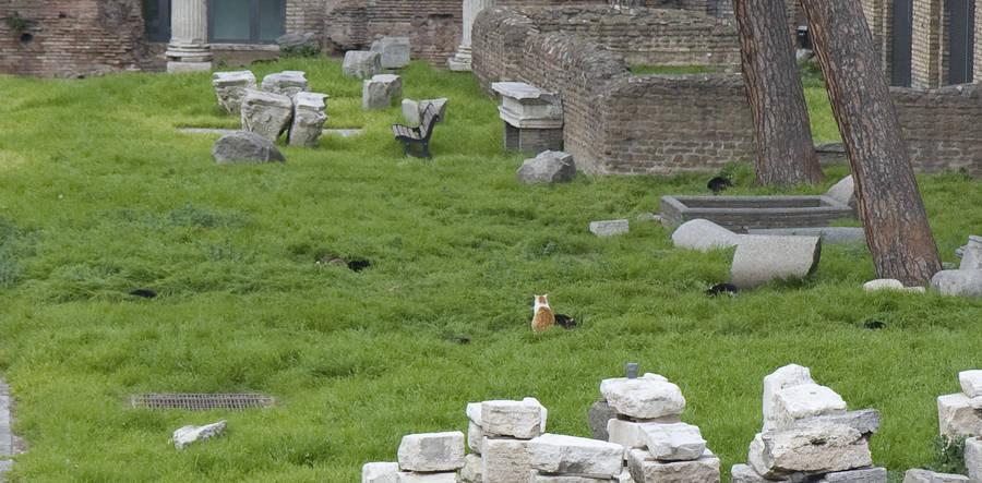 Кошки в Торре Аргентина