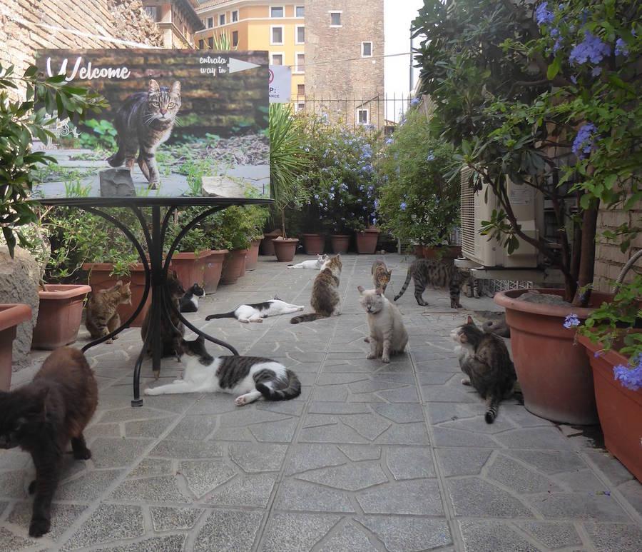 Кошки в Риме