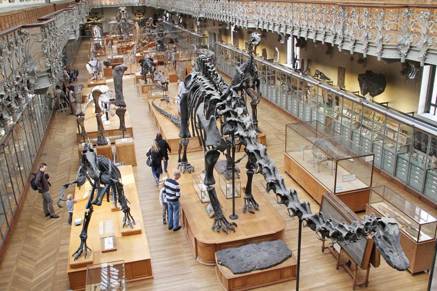 Галерея палеонтологии и сравнительной анатомии в Париже